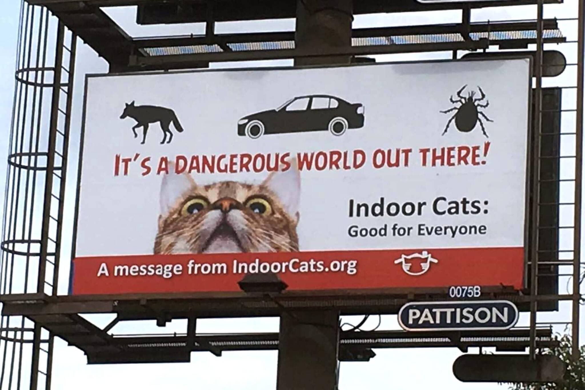 indoor cats campaign