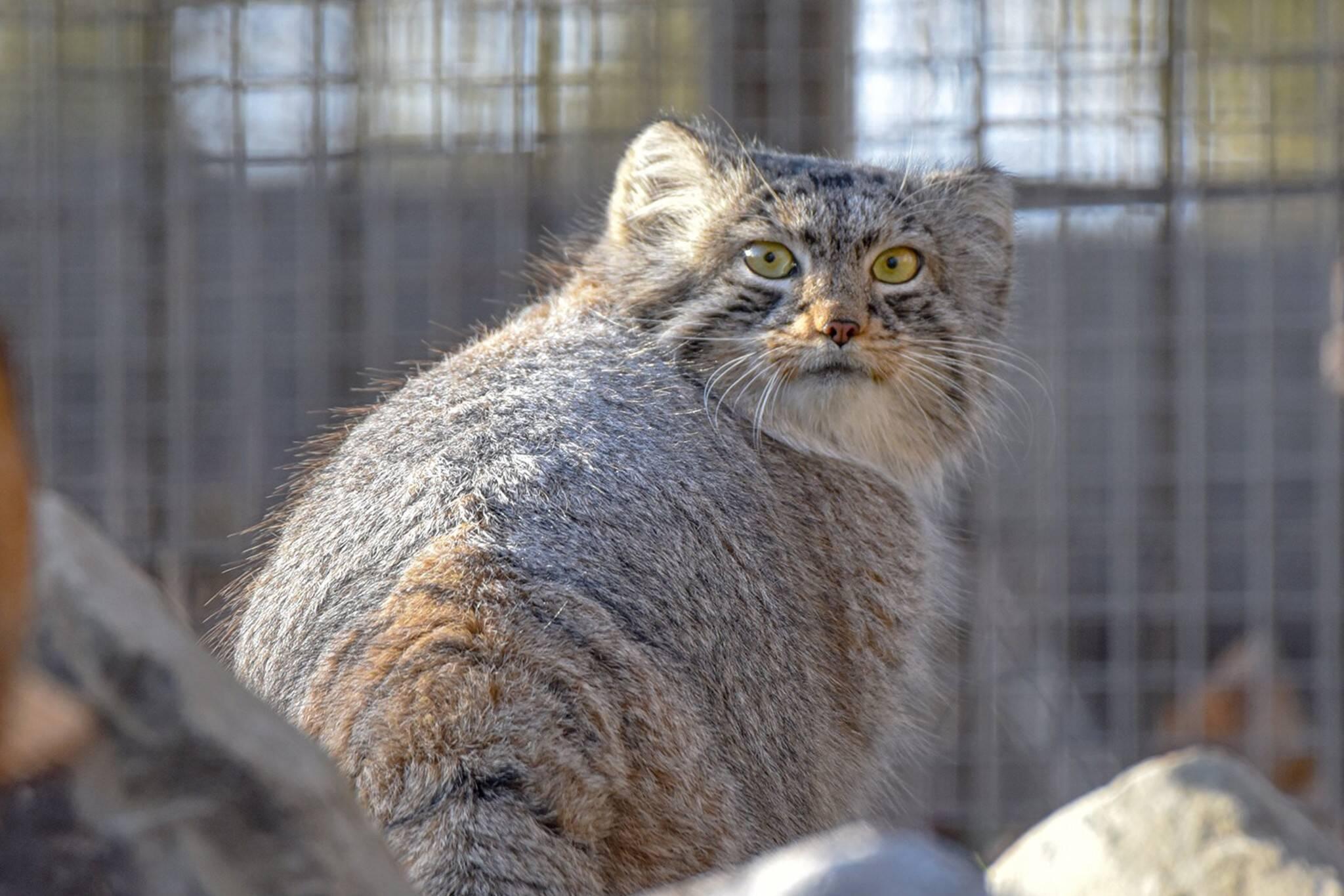 calgary zoo cats