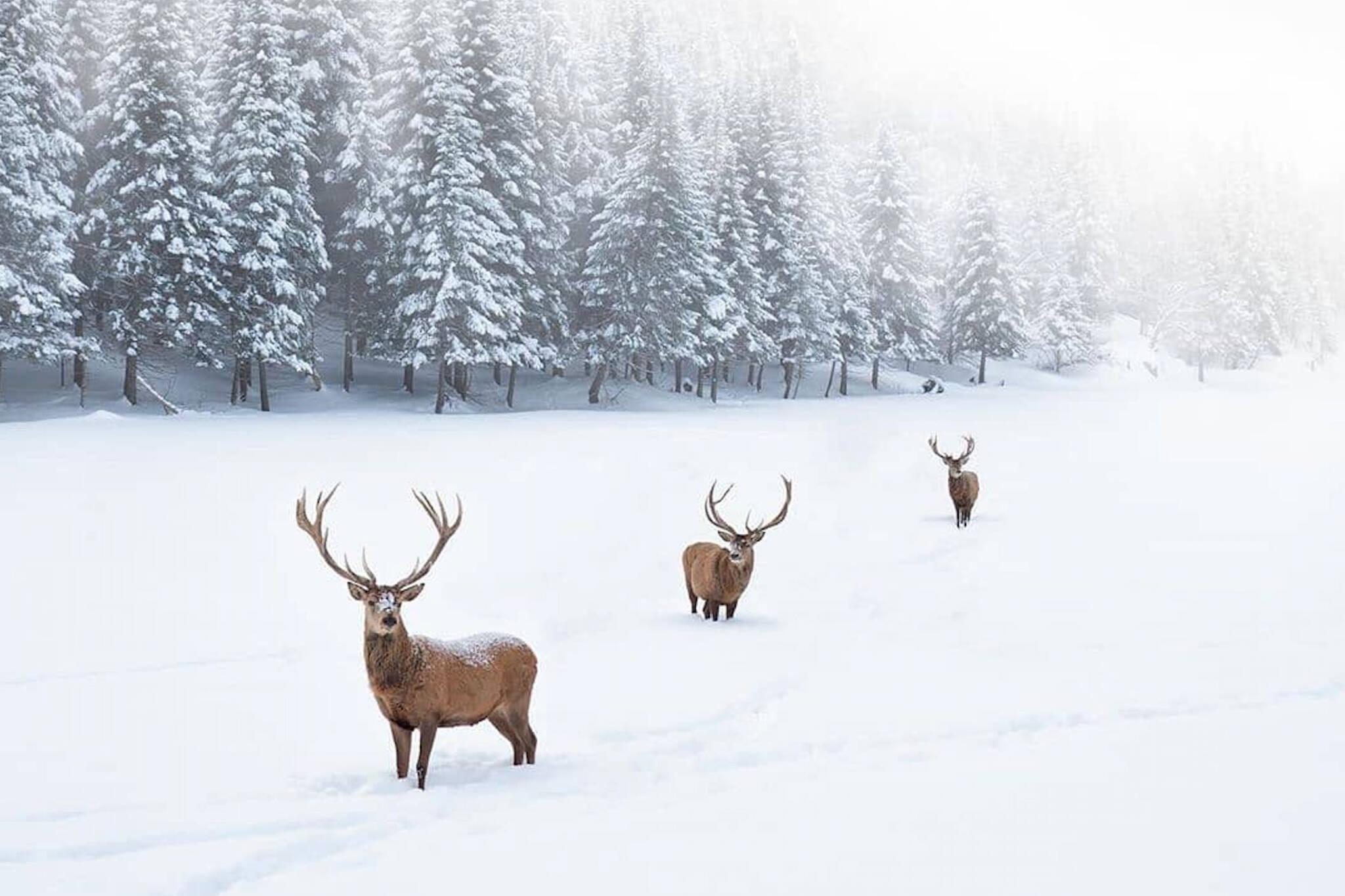 winter getaways canada