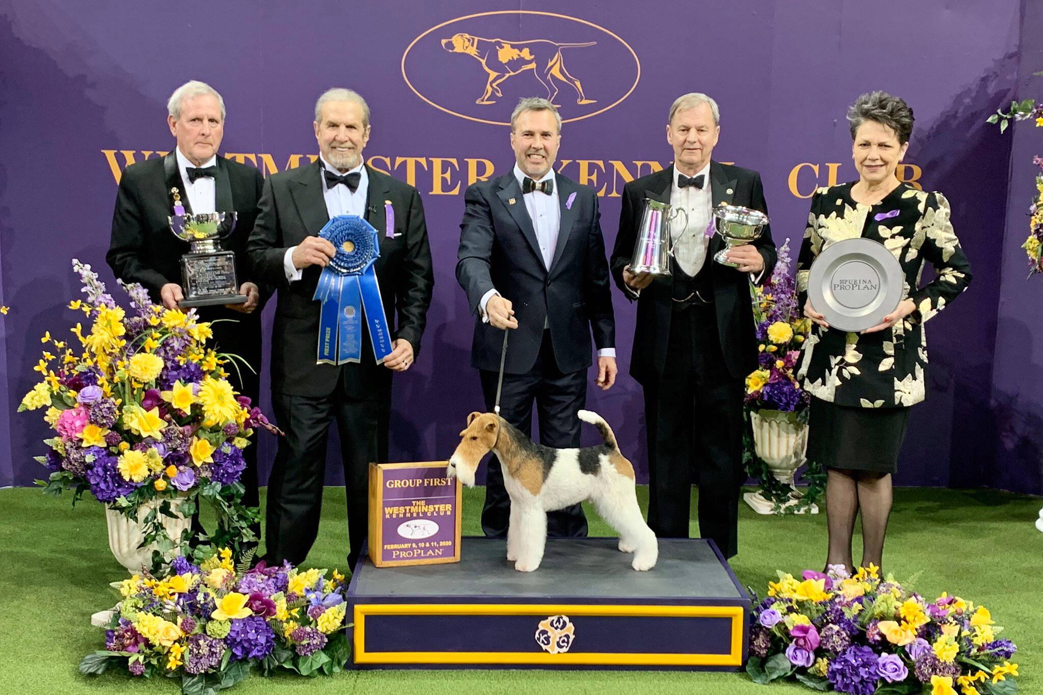 westminster dog show sportsnet