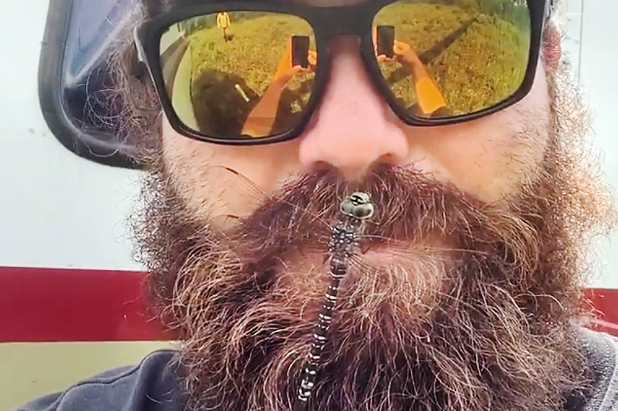 dragonfly horse fly beard
