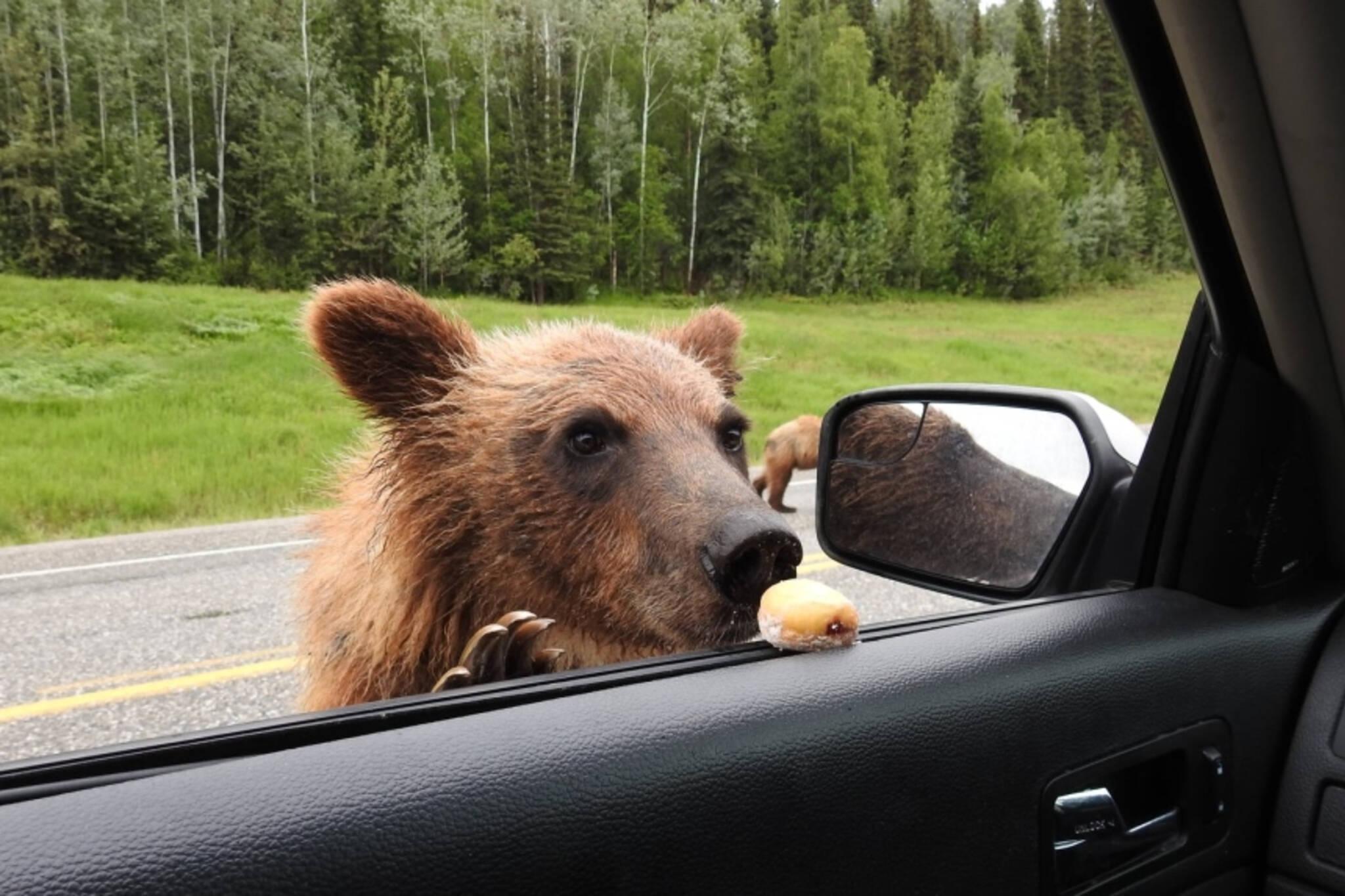 timbit bear