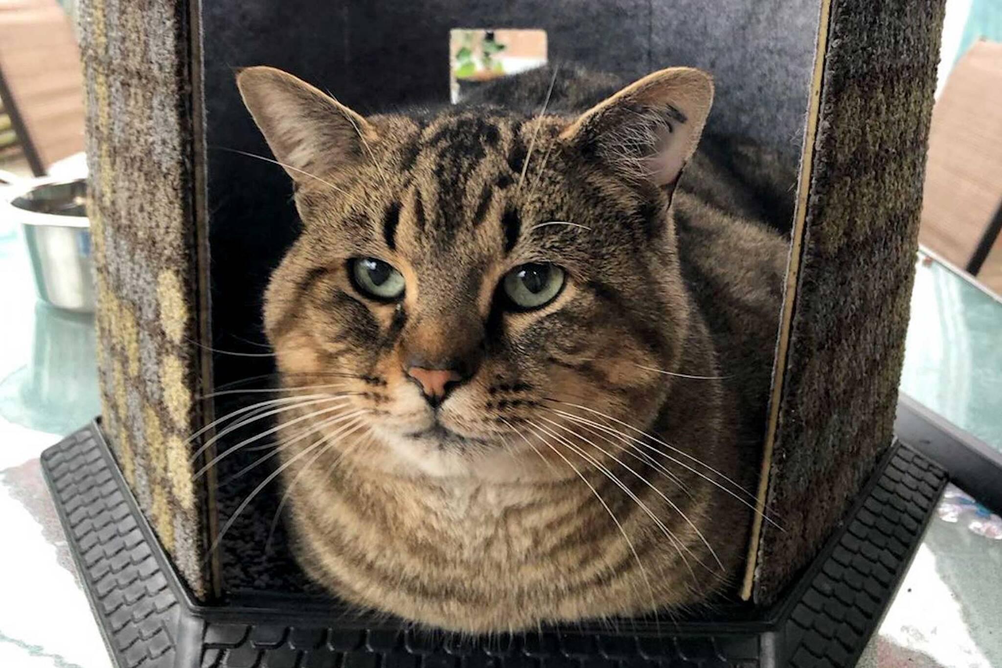 cat sanctuary richmond
