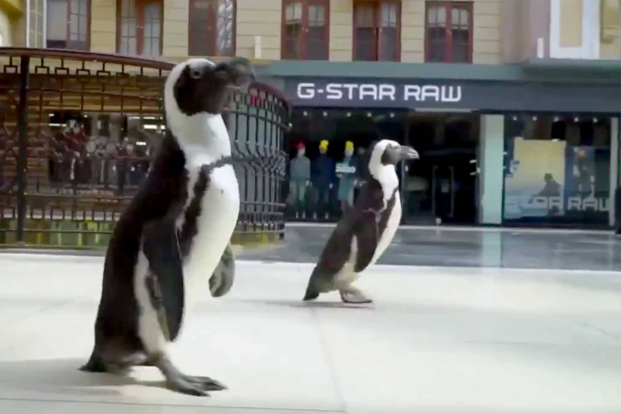 penguins mall