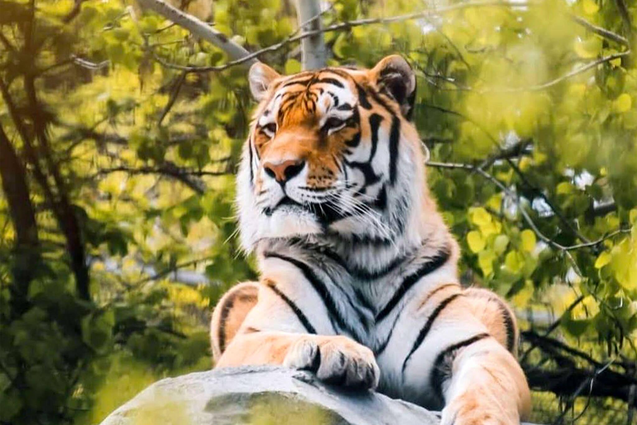 canada zoo