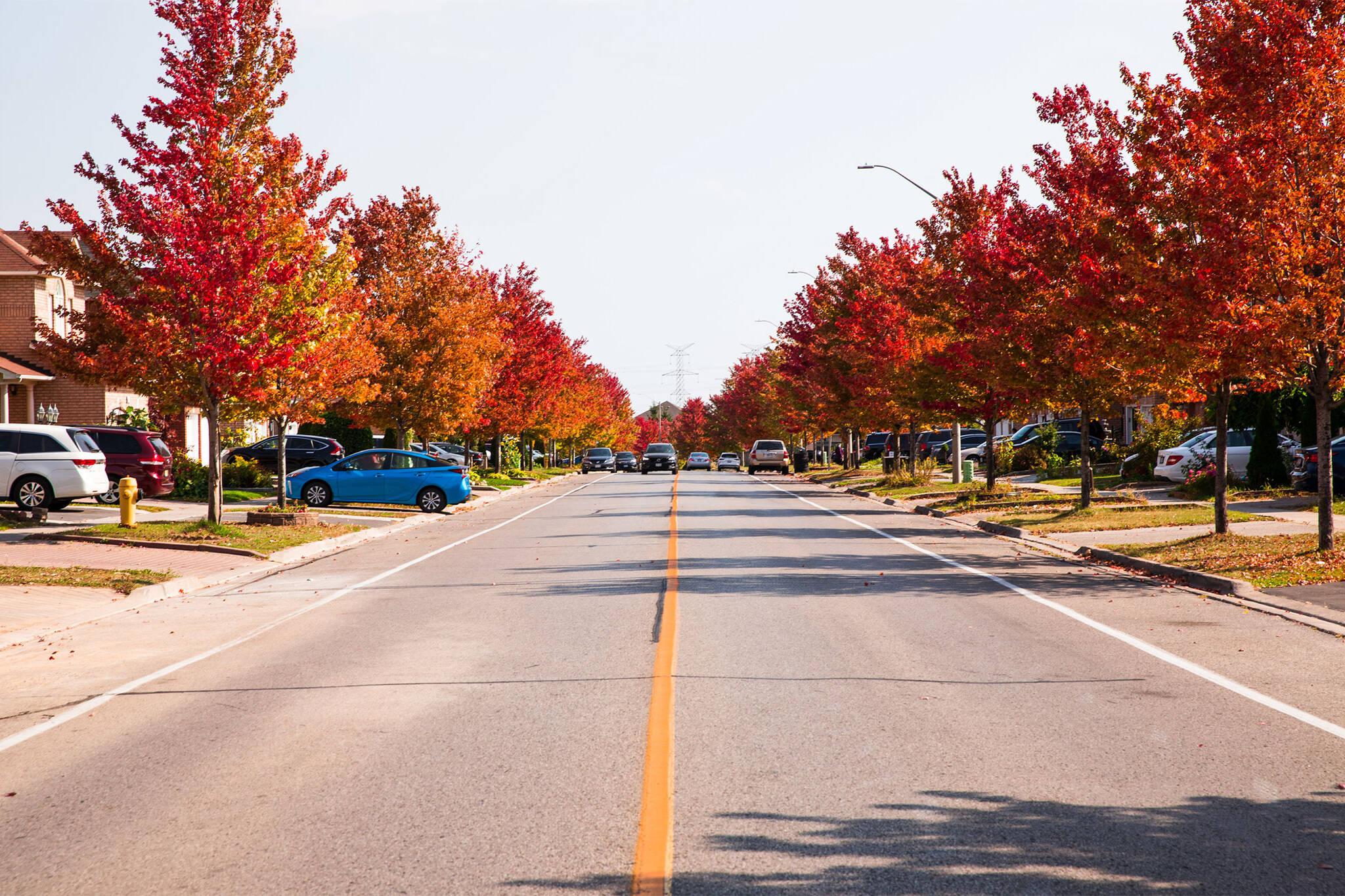 fall colours 2020